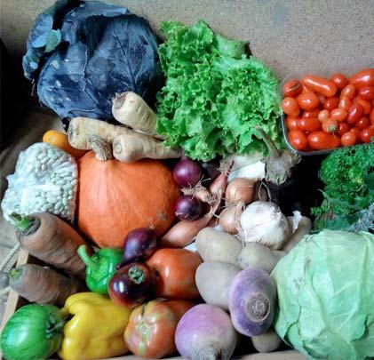 Panier de legumes pres de Saint Amand