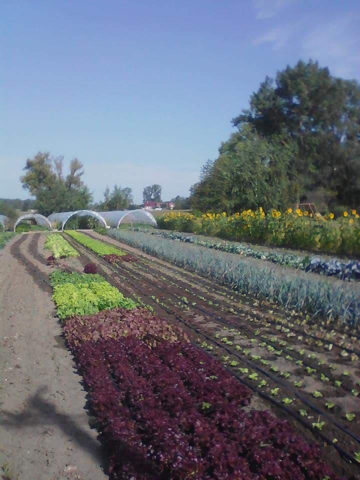 Vente de legumes pres de Conde sur Escaut